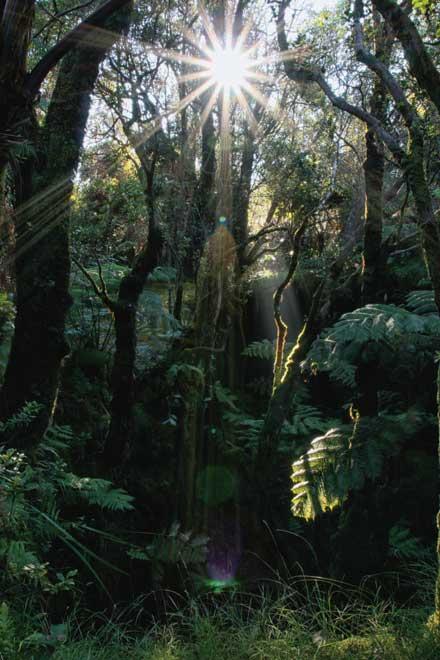 Big Isle Forest